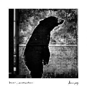 bear, Amsterdam