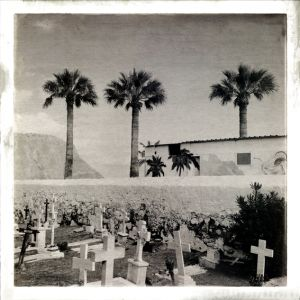 Palmtrees and Crosses