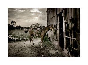 Horse, Viñales Cuba