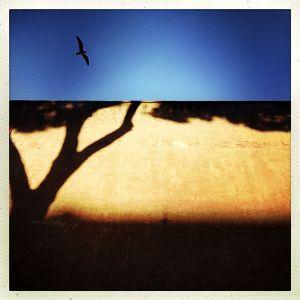 Bird, Rome